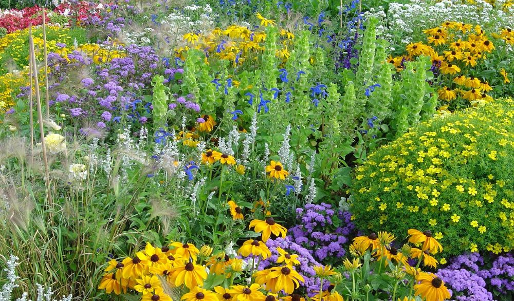 A diverse and interesting garden, with flowers of all different kinds.